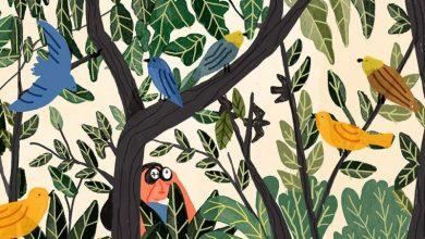 Παρατήρηση πτηνών για αρχάριους