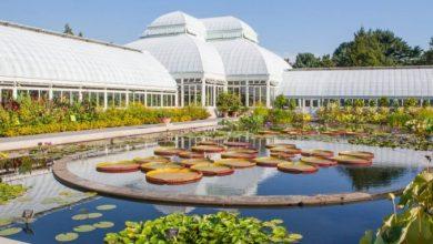 Κάντε λαχανόκηπο στο μπαλκόνι, ζωγραφική και χειροτεχνίες ακολουθώντας τα δωρεάν μαθήματα του Βοτανικού Kήπου της Νέας Υόρκης