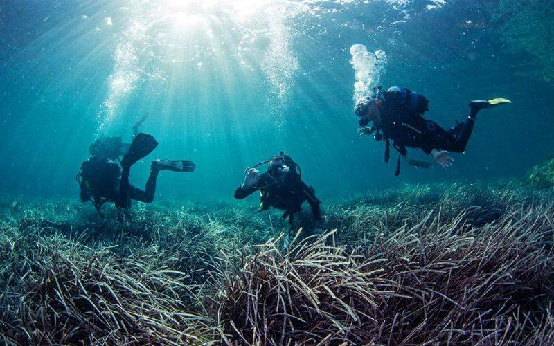 Είμαστε όλοι «ιδιοκτήτες» των θαλάσσιων λιβαδιών