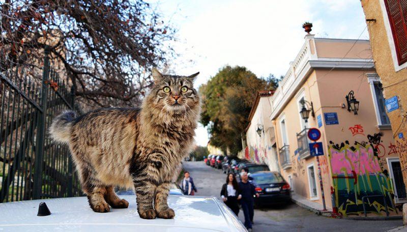 Εφτάψυχες – Nine Lives: Μια οργάνωση που σιτίζει και στειρώνει τις αδέσποτες γάτες της πόλης