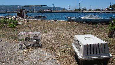 Δήμος Λευκάδας: Ολοκληρώθηκαν οι στειρώσεις αδέσποτων ζώων και ζώων ιδιοκτητών ευπαθών κοινωνικών ομάδων