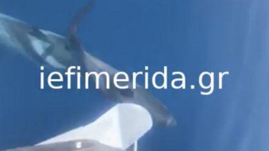 Κοπάδι δελφινιών «χορεύει» μπροστά από φουσκωτό ανοιχτά της Ιθάκης