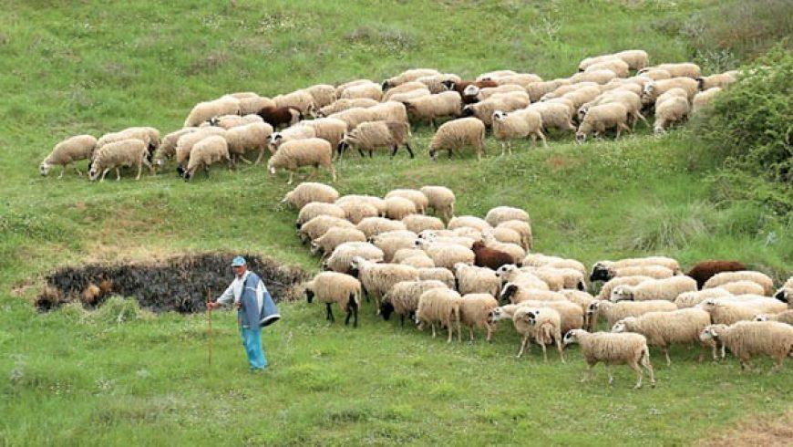 Π.Ε. Λευκάδας: Υγειονομικά μέτρα για τον Καταρροϊκό Πυρετό των ζώων
