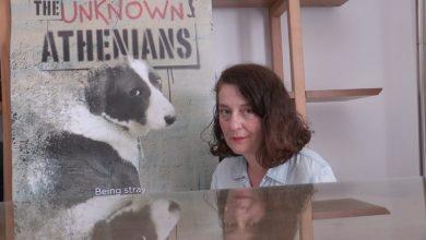 Η ζωή των σκύλων στο κέντρο Αθήνας: ένα road movie για τα αδέσποτα