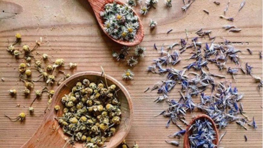 Ποια βότανα φέρνουν ευτυχία, συγκέντρωση και δύναμη