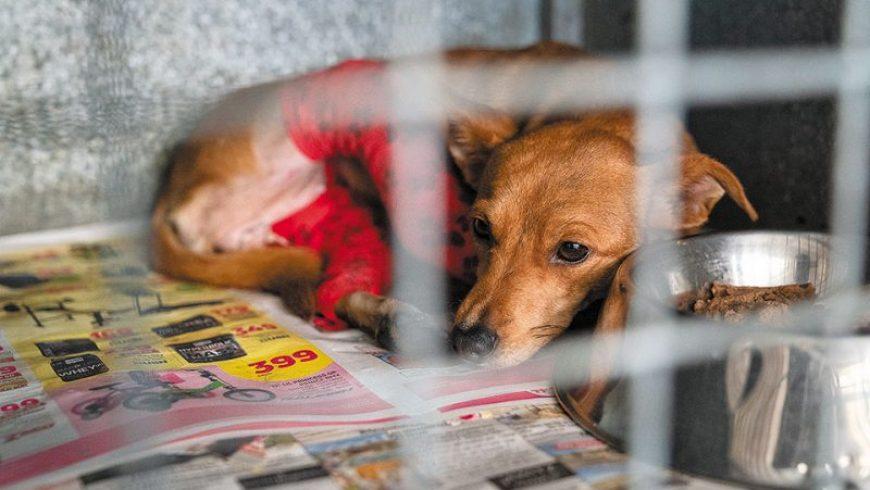 Κακούργημα η θανάτωση ή ο βασανισμός ζώου