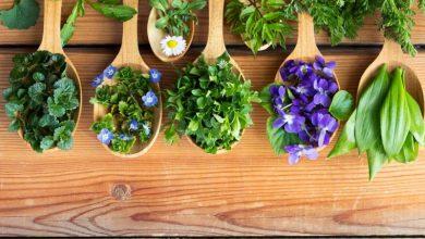 Χιλιάδες φυτά έτοιμα να εισβάλουν στα πιάτα μας