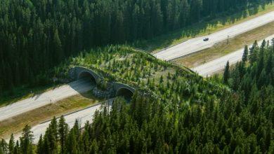 Σουηδία: Γέφυρες άγριας ζωής στους αυτοκινητοδρόμους