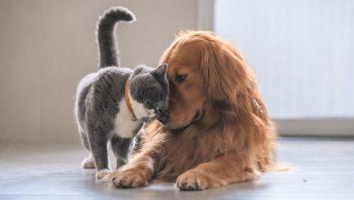 Νομοσχέδιο για τα ζώα συντροφιάς: Αναλυτικά οι 10 αλλαγές