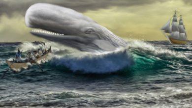 Οι φάλαινες ανέπτυξαν κοινωνικά δίκτυα αποφυγής των φαλαινοθήρων