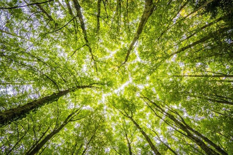 Η Νέα Ζηλανδία γίνεται η πρώτη χώρα που ελέγχει το περιβαλλοντικό αποτύπωμα των επιχειρήσεων