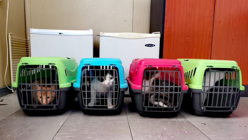 Ξεκίνησε το πρόγραμμα εθελοντικών στειρώσεων για τα αδέσποτα ζώα