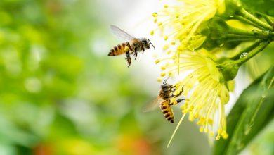 Τα φυτοφάρμακα «συνεργάζονται» στην εξόντωση των μελισσών