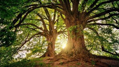 «Καμπανάκι» από επιστήμονες: Σχεδόν το ένα στα τρία είδη δέντρων κινδυνεύουν με εξαφάνιση