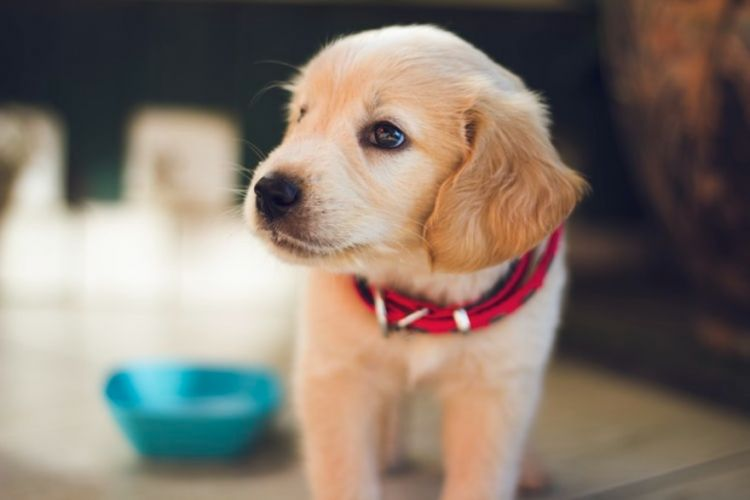 Ζώα συντροφιάς: Κατατέθηκε στη Βουλή το ν/σ – Τι προβλέπει